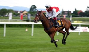 Will Horse Doping Bill Pave the Way for Online Poker?