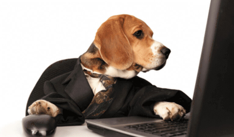 A dog browsing on its computer