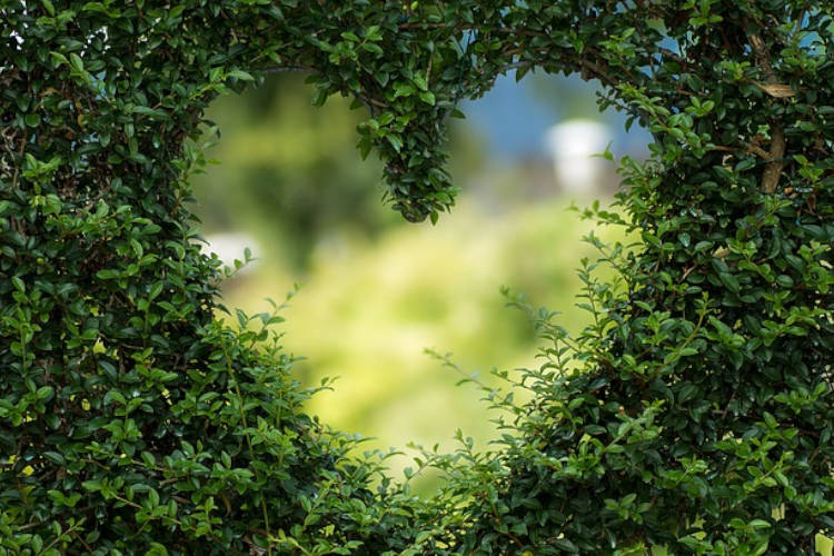 A heart-shaped form cut in the hedge.